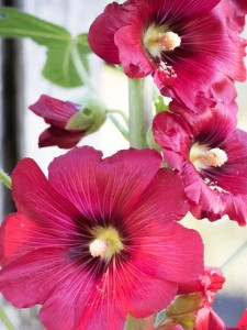 pink flowers to bring joy and healing
